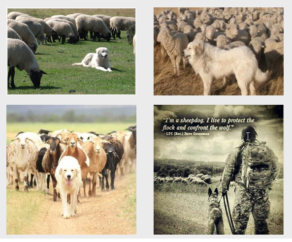 Sheep Dogs Life Leaders